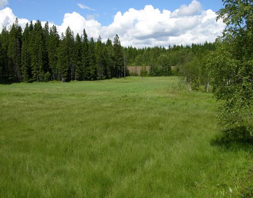 Stormyra 2004