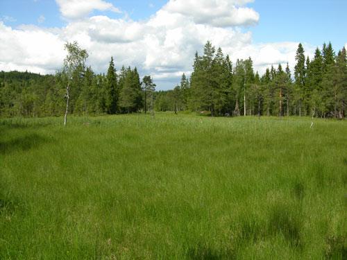 Fra Slåttemyra 2004. Foto: Tor Øystein Olsen