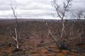 Ecological desert near Nikel