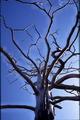 Dead tree on the Kola Peninsula