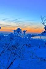 Vinterlys