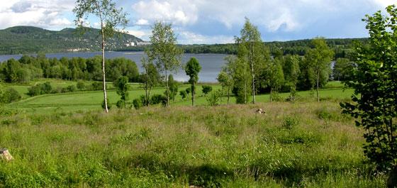 Kulturmark i Maridalen. Foto: Tor Øystein Olsen