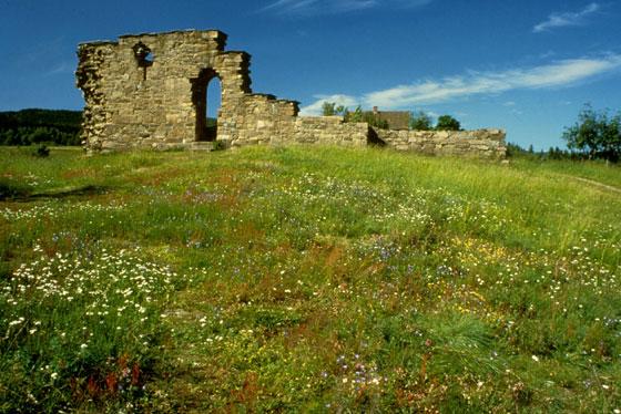 Blomstereng (tørreng) ved Kirkeruinene. Foto: Helge Viken