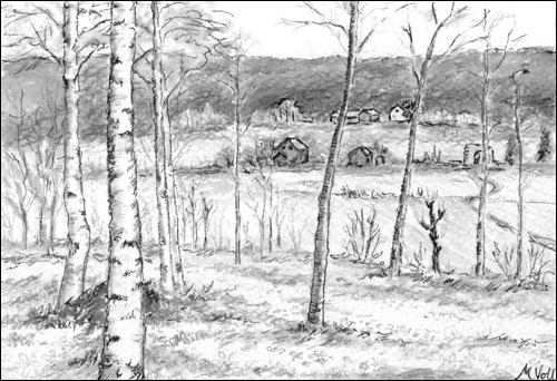 Fra Bjørkelunden. Tegning: Målfrid Voll
