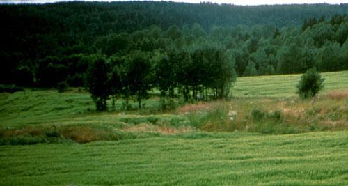 Kirkebyhagen 1995. Foto: Trygve Christensen
