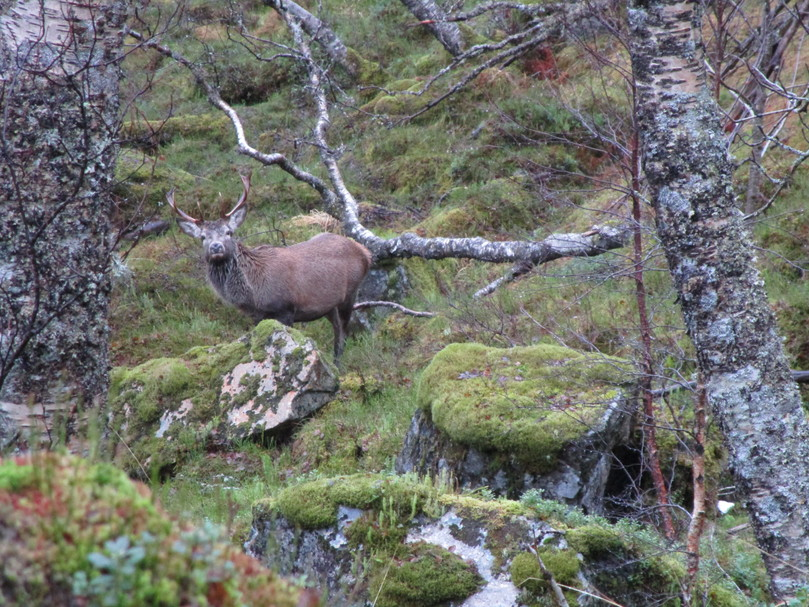Frå Sørafjellet hjortevald sitt område