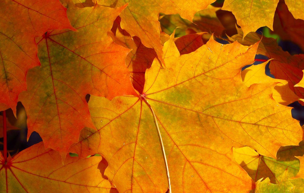 Høst blader nærbilde Unsplash
