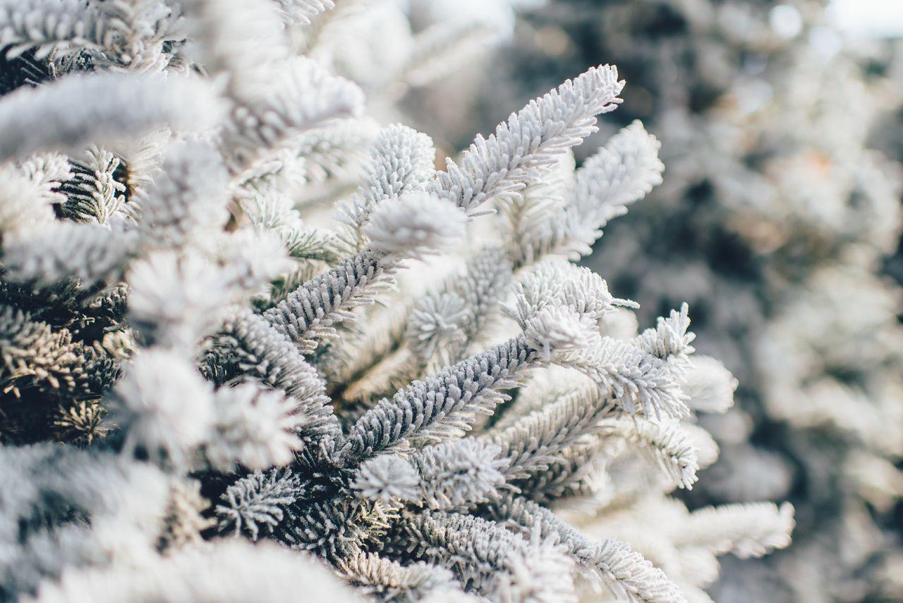 frost vinter snø gran jul Unsplash