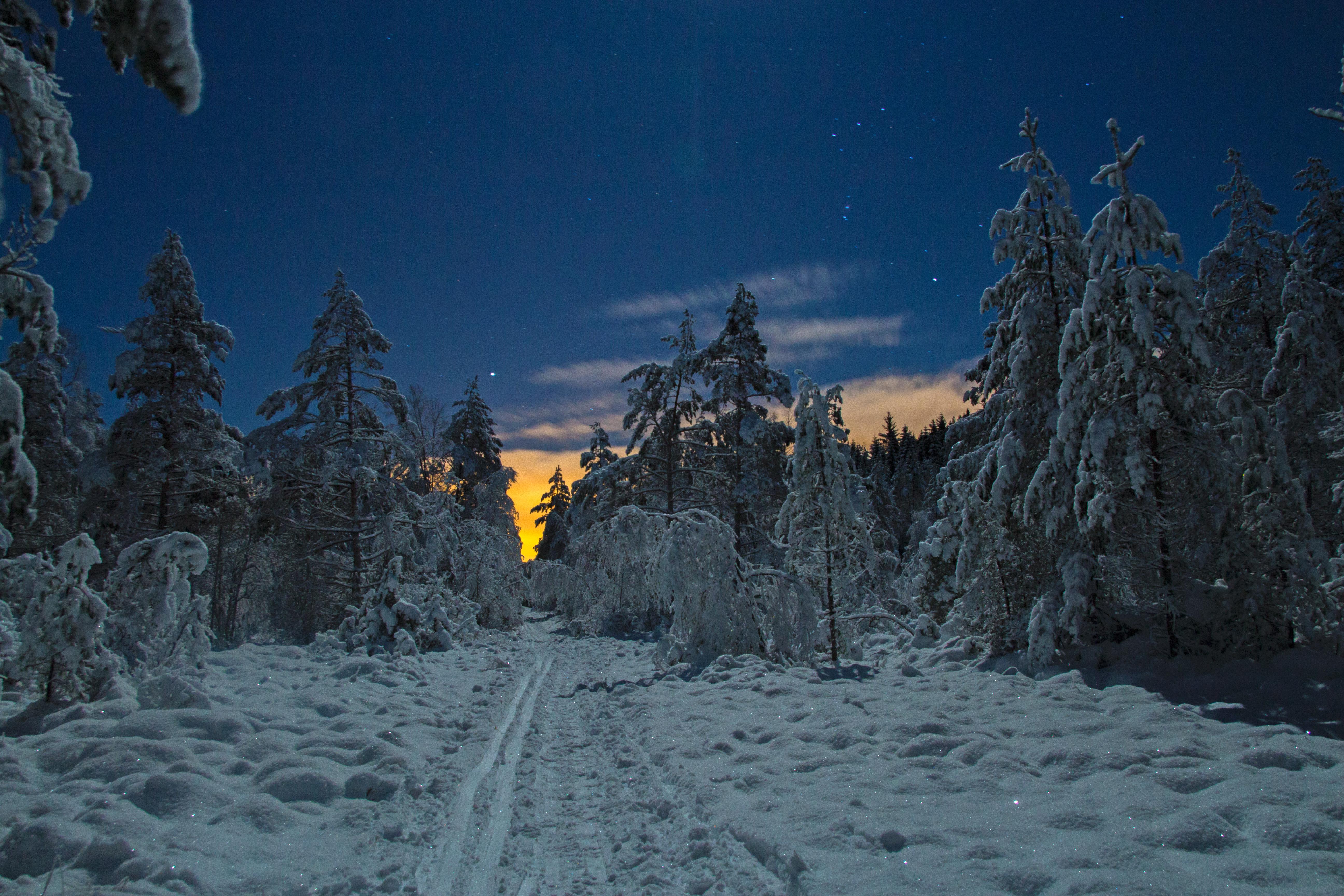 Anders Eidsnes_Orions belte_nattbilete frå skiløypa i skogen på Eikanger.jpg