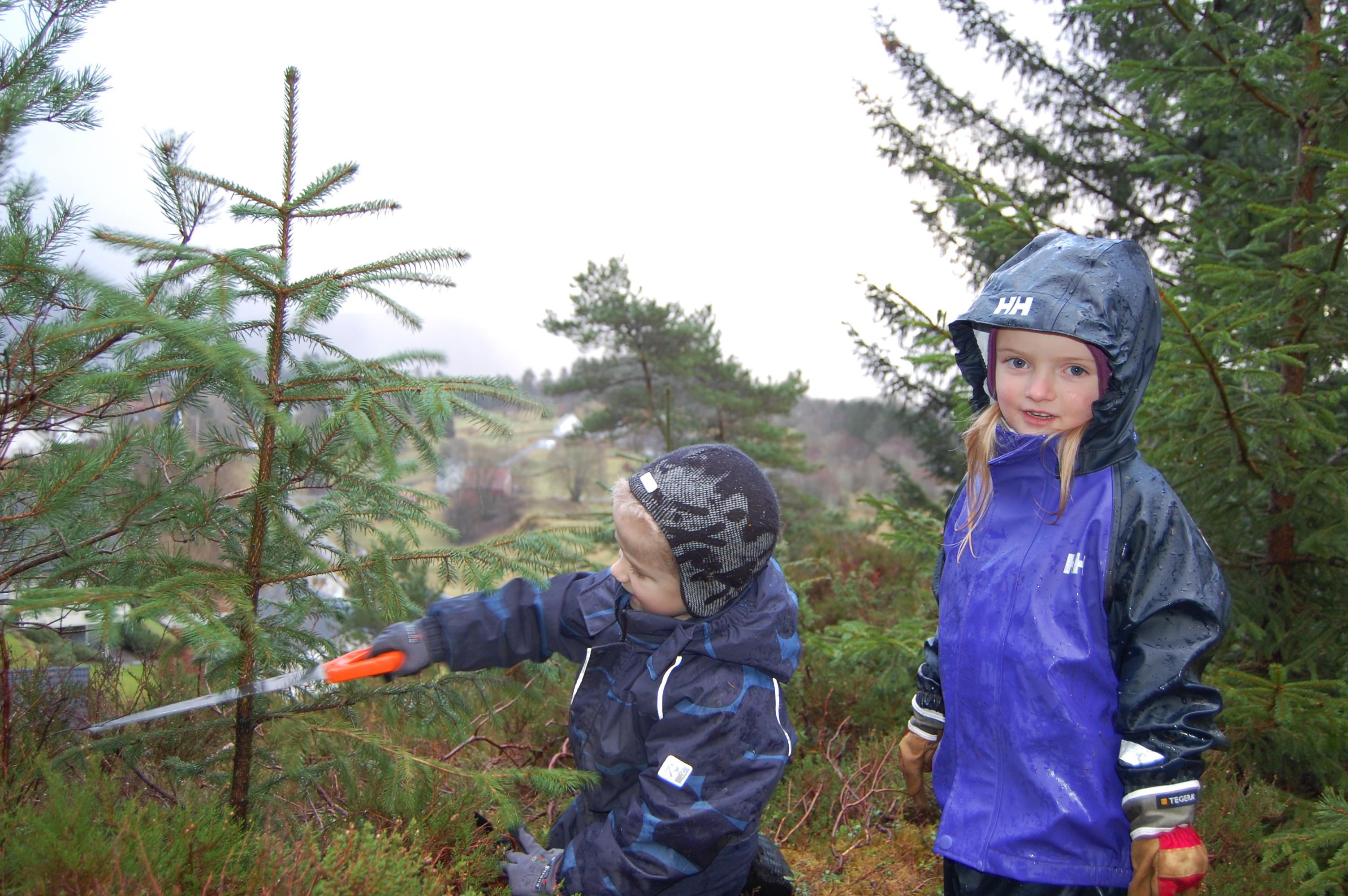 Linda Sæle Kjenes_på juletrejakt.jpg
