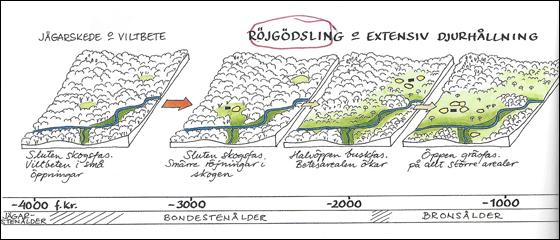 Ekstam-historie-2000.jpg