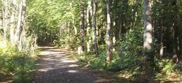 Trær langs vei