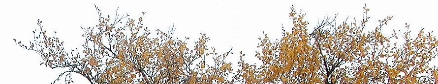 høstfarger i trærne