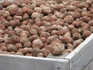 Gode avlinger i 2008 - til glede for oss og dere forbrukere