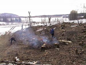 Skjøtsel løveng vinter 2003. Foto: Arild Andresen