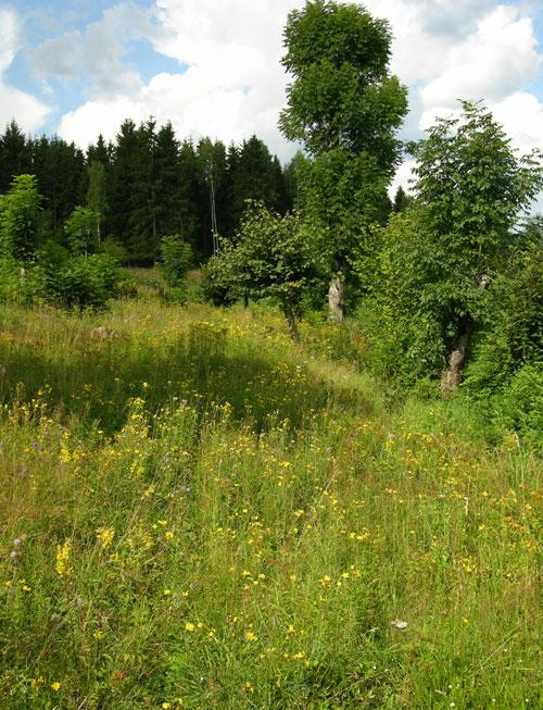 Løvenga i august 2004 Foto: Tor Øystein Olsen 010804