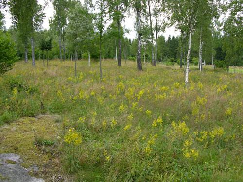 Bjørkelunden i august Foto: Tor Øystein Olsen 010804