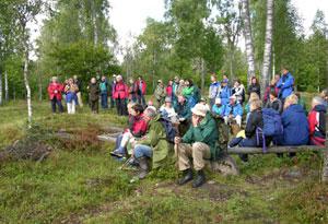 Bjørkelunden Hammeren Foto: Tor Øystein Olsen