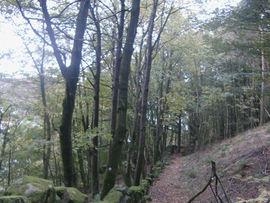 Skog nær Egersund