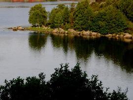 Vann og skog i naturen