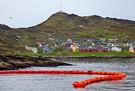 Oljevernøvelse i Breivikfjorden - copyright Anne Olsen-Ryum