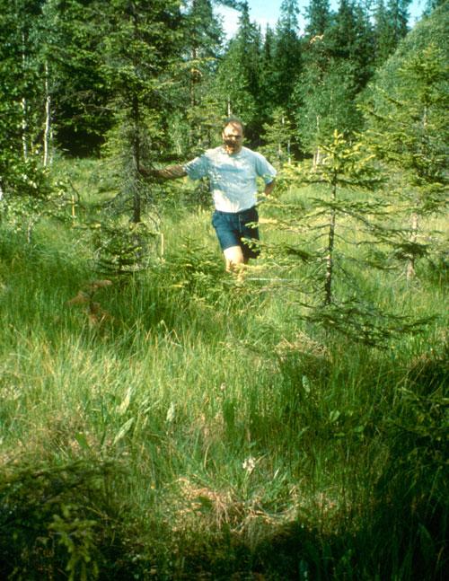 Fra Slåttemyra 1996. Foto: Asbjørn Moen