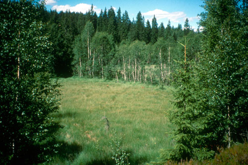 Slåttemyra i 1996. Foto: Asbjørn Moen