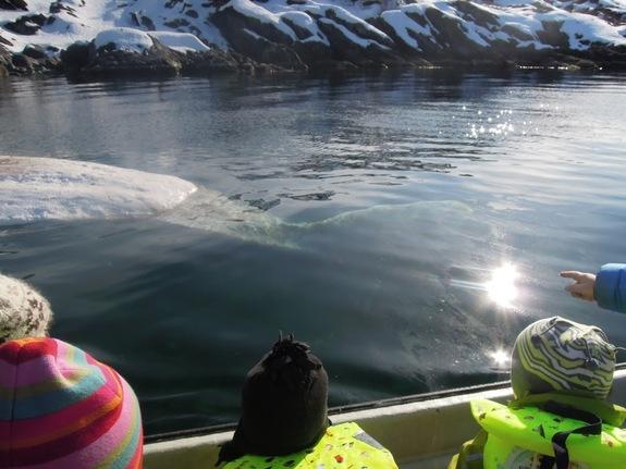 Fjerning av død hval i Breivikbotn - foto: Daniel Andersen