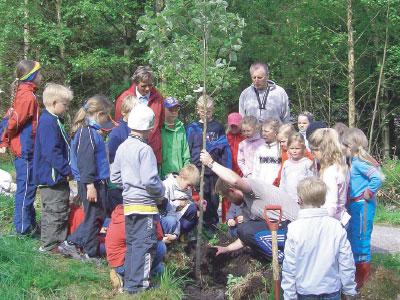 Planting av tre i Revsdalen