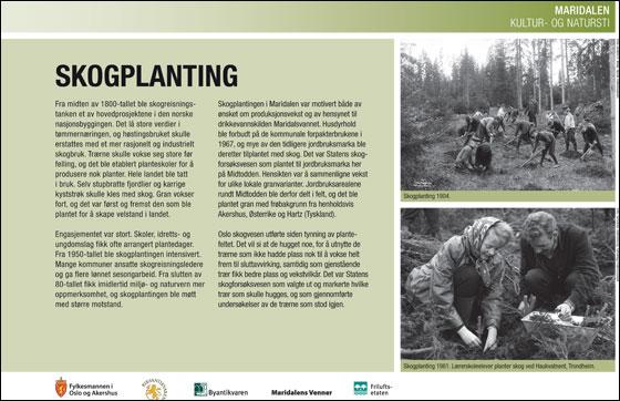 Skogplanting. Byantikvaren.