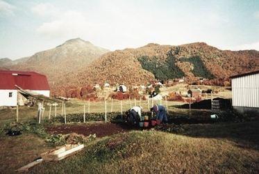 Potetopptaking på Røsnes ca. 1988. Originalbildet er lånt av Joel Johnsen.