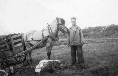 Torvkjøring med hest på Langmoa, ca. 1955. Originalbildet er lånt av Vidar Klaussen.