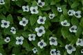 Photocode: TN-Nature-008