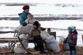 Tundra family