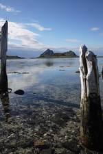 Gaukværøya mellom gamle stokker
