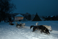 Dogsledge in Kirkenes