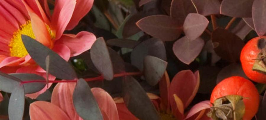 Send en blomstrende hilsen - levering samme dag!