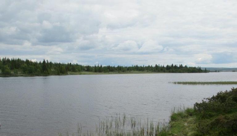Våsjøen