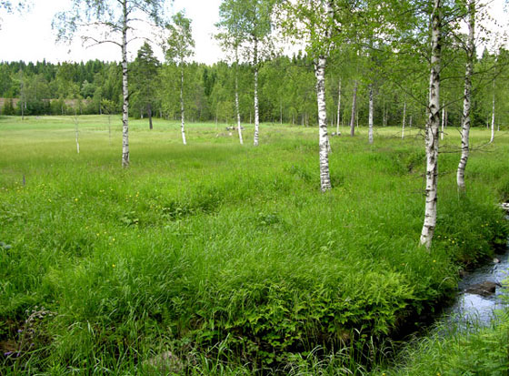 Stormyra, Slåttemyra. Foto: Tor Øystein Olsen