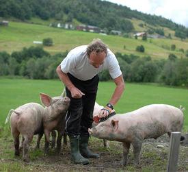mann og gris
