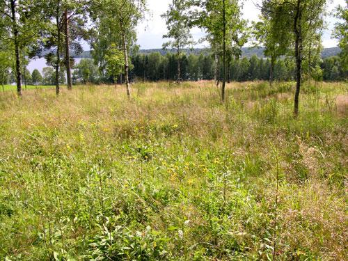 Magereng i Bjørkelunden. Foto: Tor Øystein Olsen