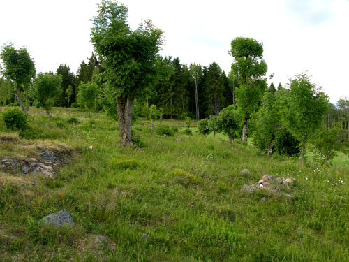 Lauveng i Maridalen. Foto: Tor Øystein Olsen