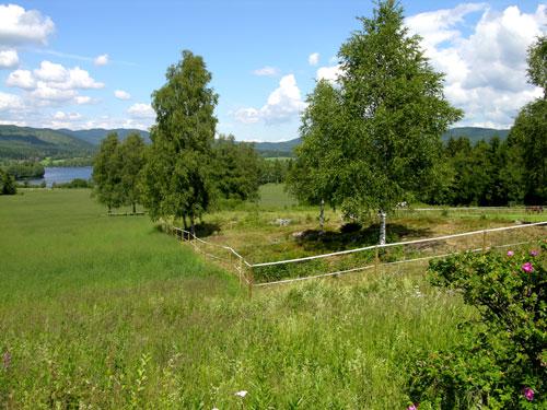 Åkertange ved Låkeberget. Foto: Tor Øystein Olsen