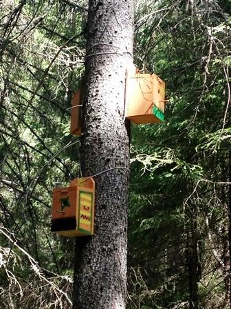 På veg til Langberget, 5.trinn Aurvoll sine fuglekasser.jpg