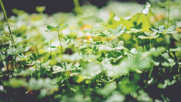 Grønneblomsterfuktig_unsplash