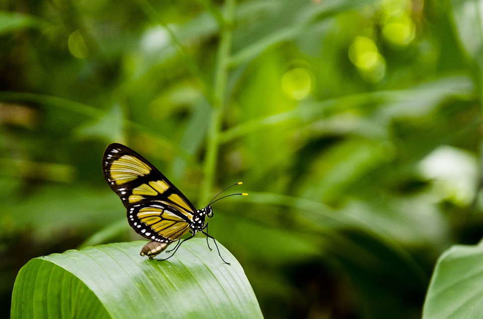 Sommerfugl blad klima