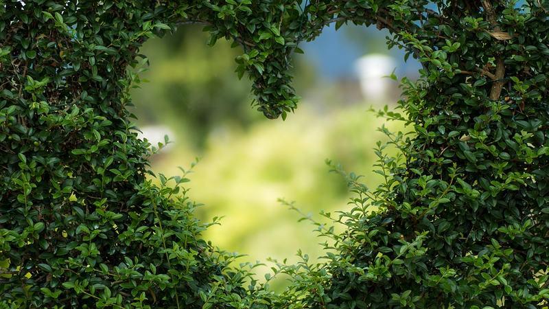 Hjerte i hekk