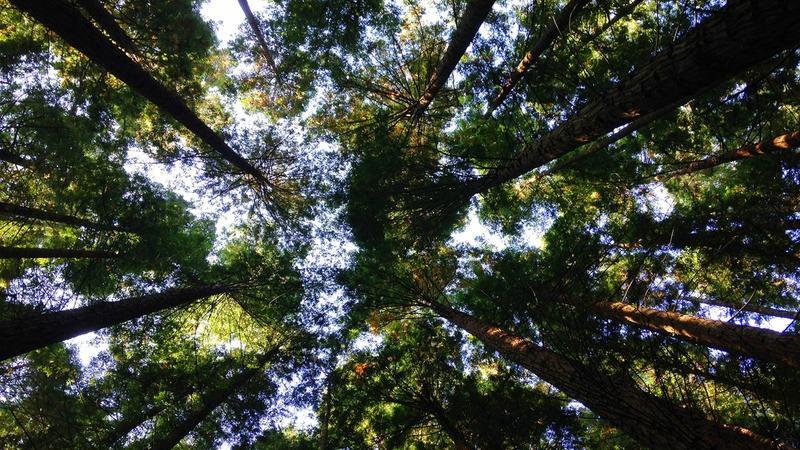 Trær skog lys