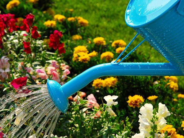 Vanning av hage