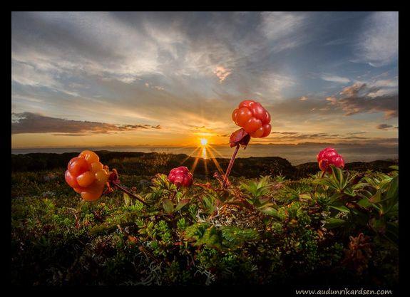 Multebær - foto: Audun Rikardsen